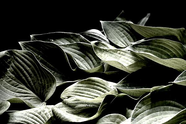 Abstract Stuff.....your interpretation of whatever you choose.-abstract-leaves.jpg