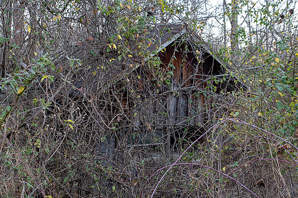 Old and Abandoned-a81_1775.jpg