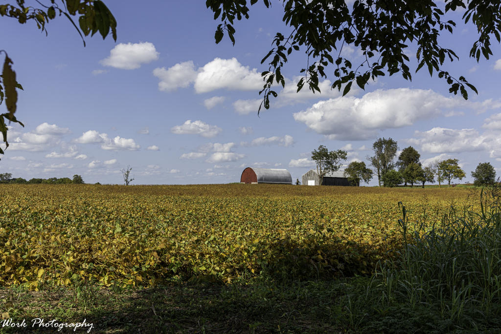 Post your barns and rural structures.-20200927-r81_5442-2.jpg
