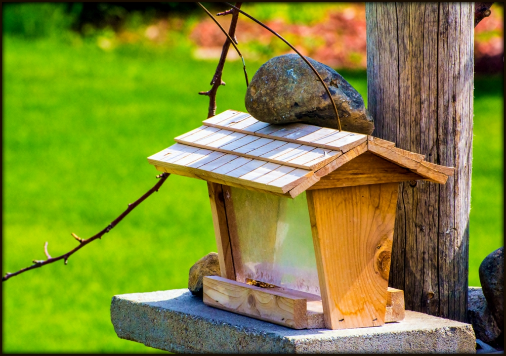 Post your bird feeders-710_5028.jpg