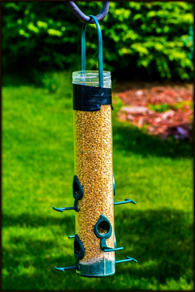 Post your bird feeders-710_5034.jpg