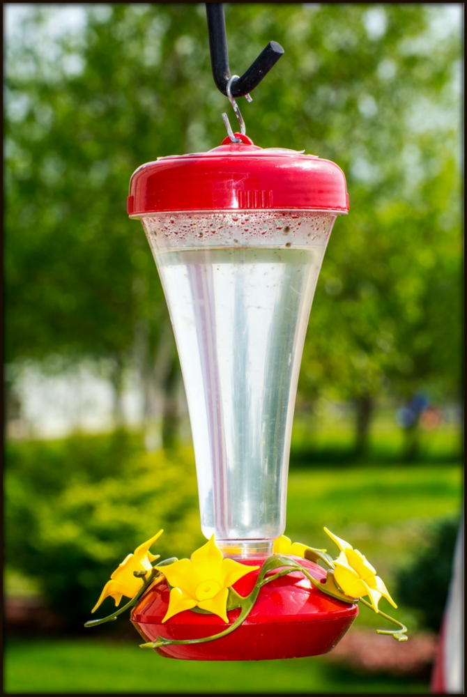 Post your bird feeders-710_5054.jpg