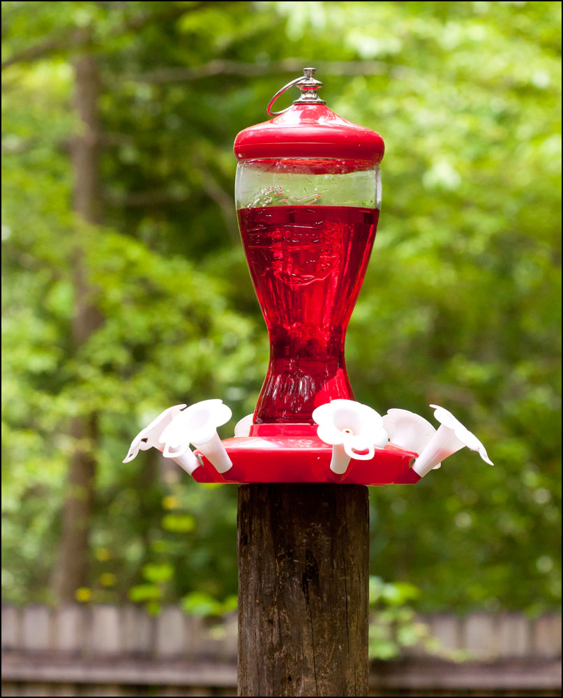 Post your bird feeders-dsc_6455.jpg