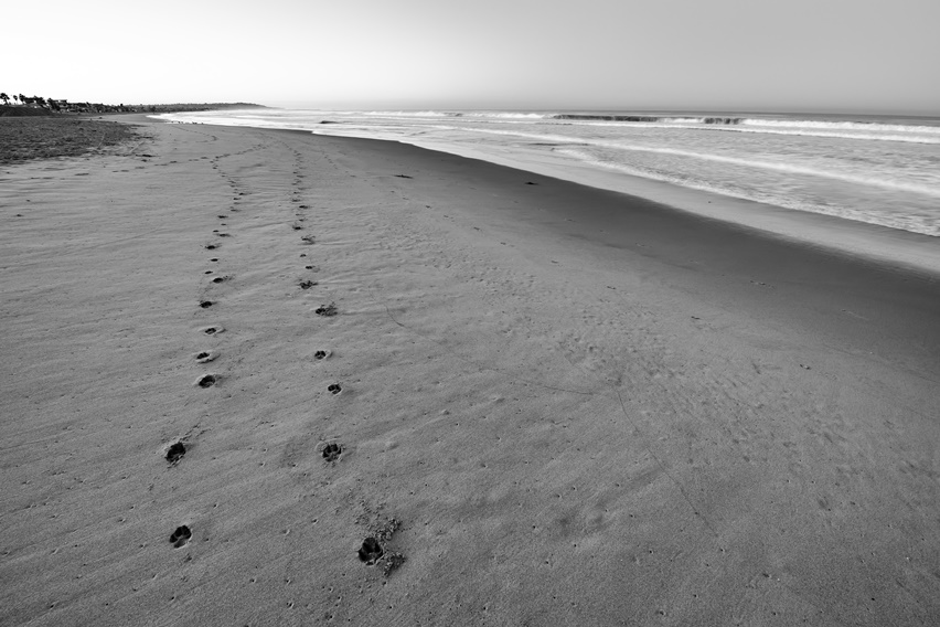 Post Your Black and Whites Photos!!-_n8d3280-edit-4-3-sm.jpg