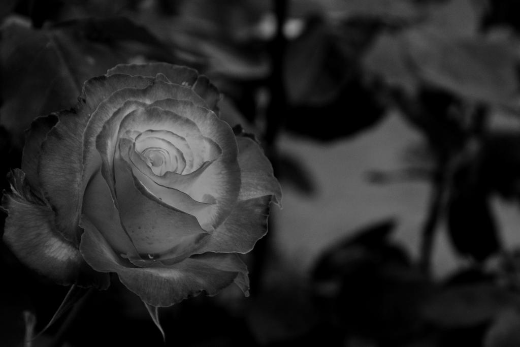 Post Your Black and Whites Photos!!-dsc_4905.jpg