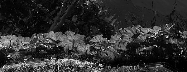 Post Your Black and Whites Photos!!-reflections-pond-100_2479-copy.jpg