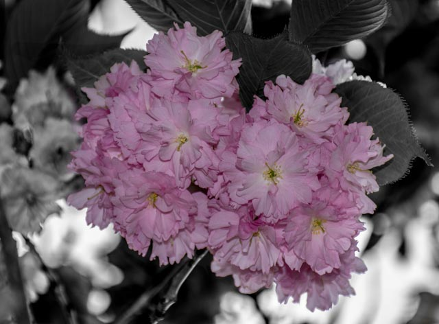 Post your selective color photos here-dc-lego.jpg