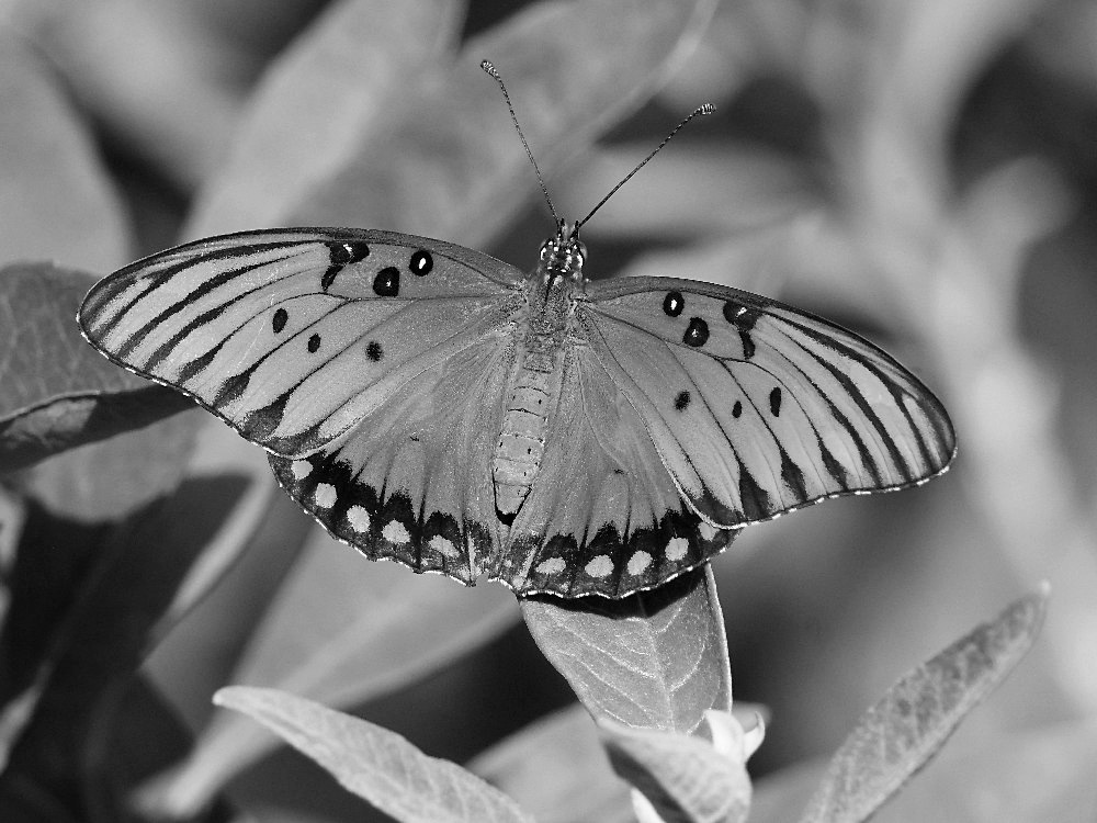 Post Your Black and Whites Photos!!-fritbw.jpg