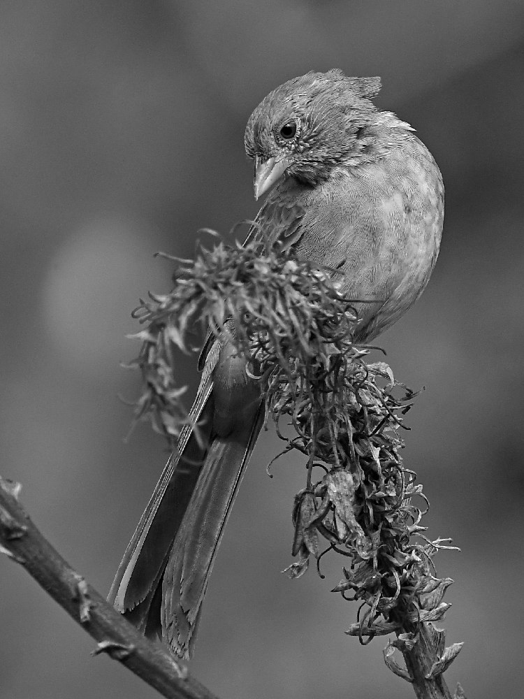 Post Your Black and Whites Photos!!-towheebw.jpg