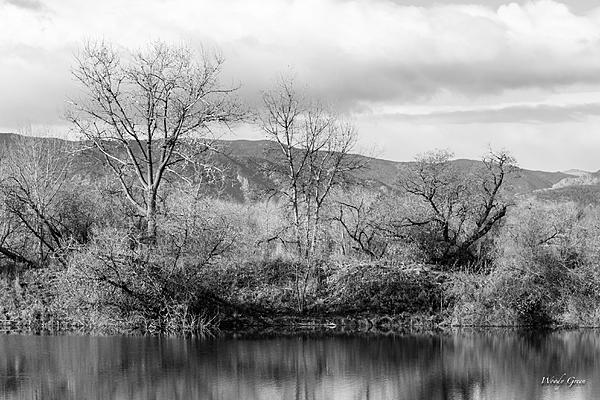 Post Your Black and Whites Photos!!-waldenponds-302.jpg