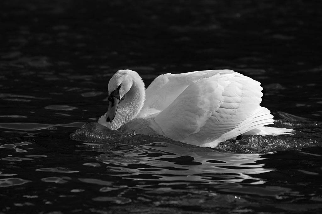 Post Your Black and Whites Photos!!-dsc_5212_37304014485_o.jpg