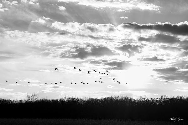 Post Your Black and Whites Photos!!-goosesunset-400.jpg