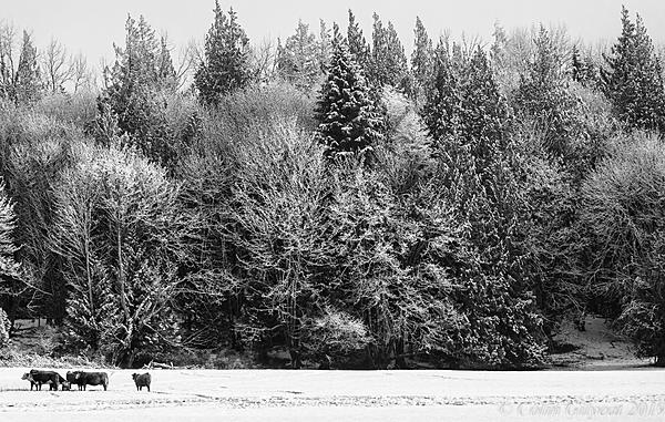 Post Your Black and Whites Photos!!-20190228_2398.jpg