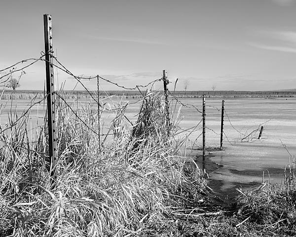 Post Your Black and Whites Photos!!-fence-401.jpg