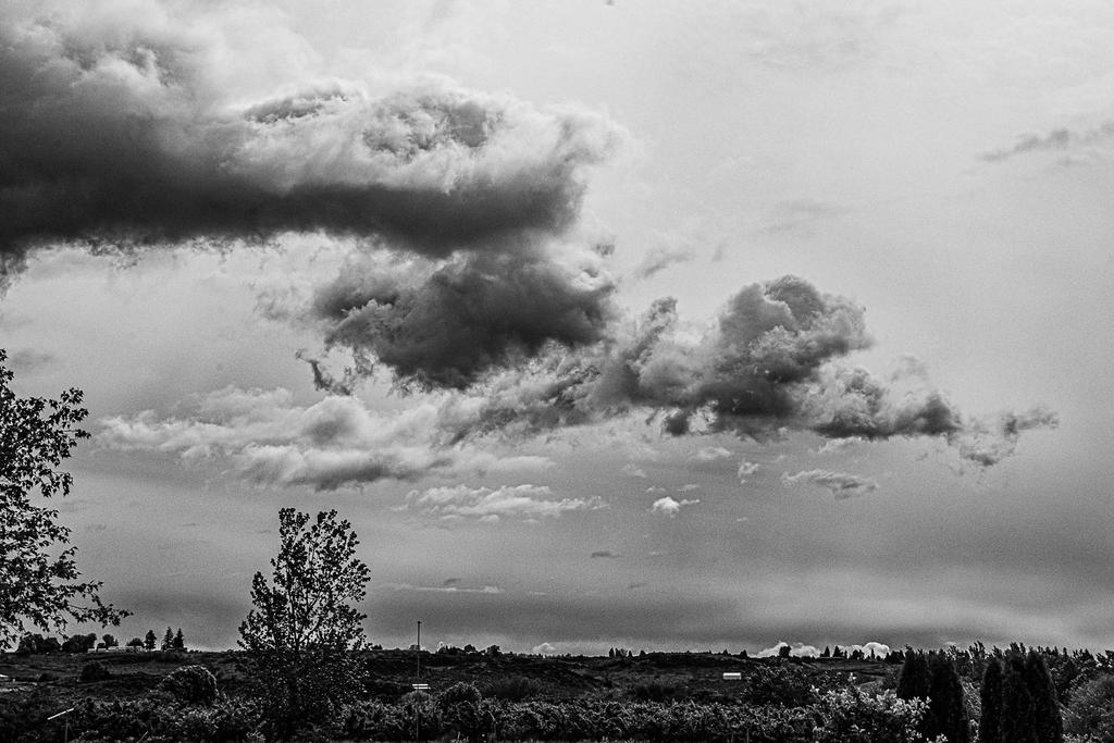 Post Your Black and Whites Photos!!-710_1396-edit.jpg