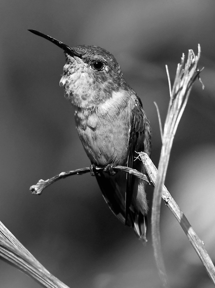 Post Your Black and Whites Photos!!-hummerbw.jpg