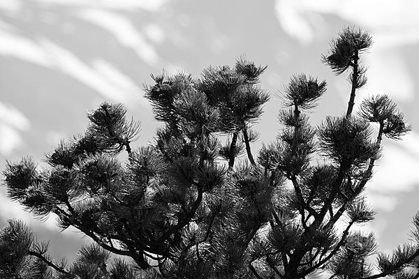 Post Your Black and Whites Photos!!-bwtreesky-405.jpg