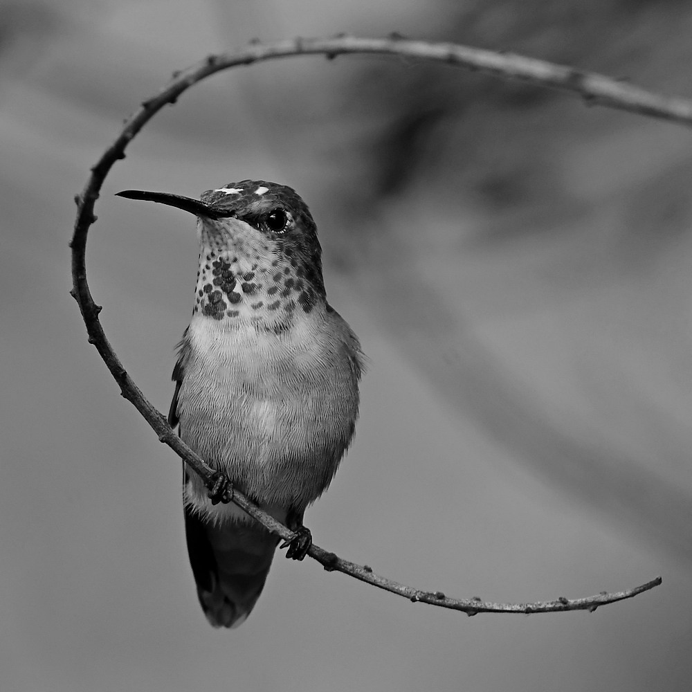 Post Your Black and Whites Photos!!-hummerbw4.jpg