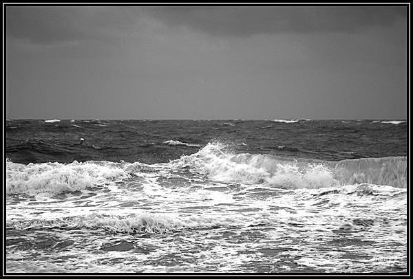 Post Your Black and Whites Photos!!-_71d0498.jpg