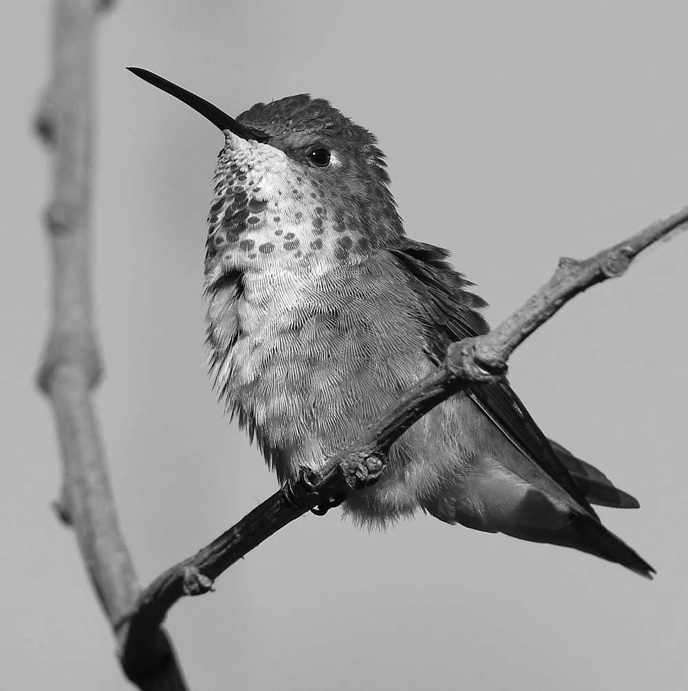 Post Your Black and Whites Photos!!-hummerbw7.jpg