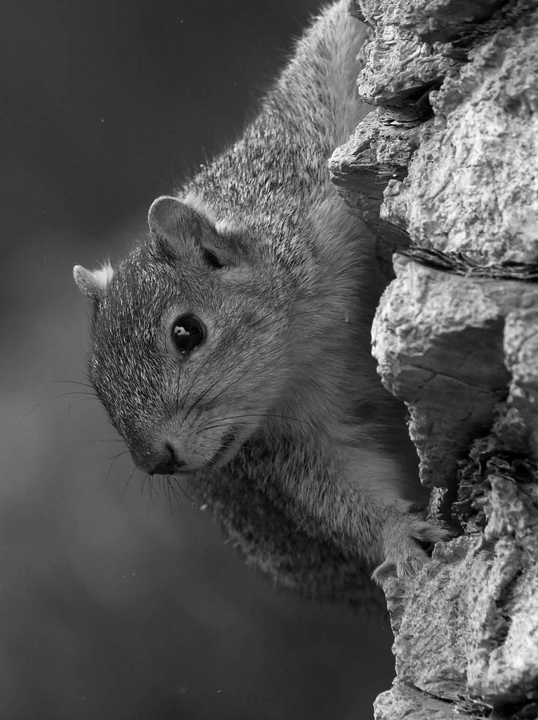 Post Your Black and Whites Photos!!-squirrelbw.jpg