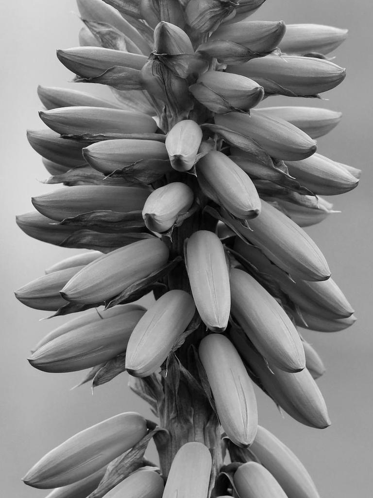 Post Your Black and Whites Photos!!-yuccabw.jpg