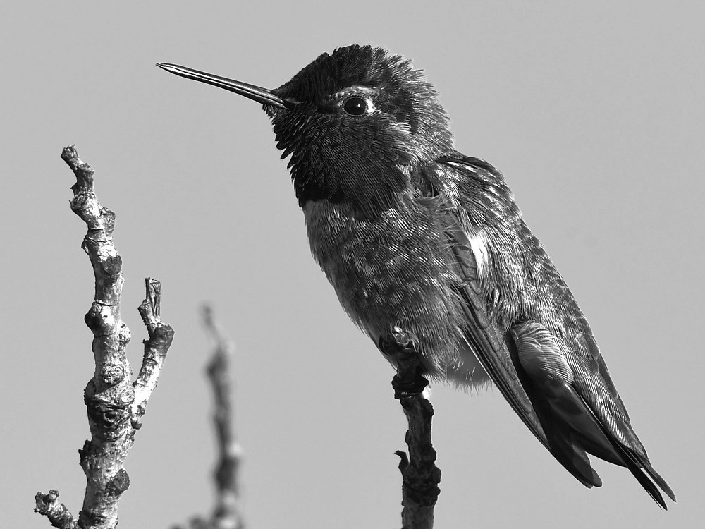 Post Your Black and Whites Photos!!-hummerbw2.jpg