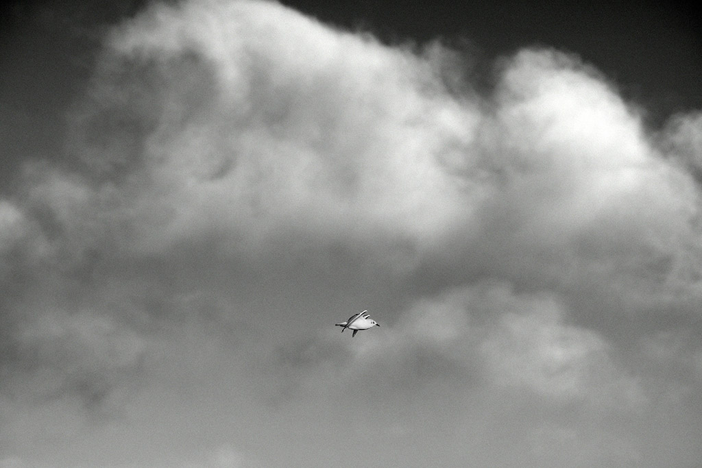 Post Your Black and Whites Photos!!-dsc_2302.jpg