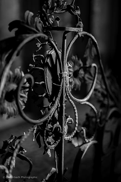 Post Your Black and Whites Photos!!-_dsc5639bw.jpg
