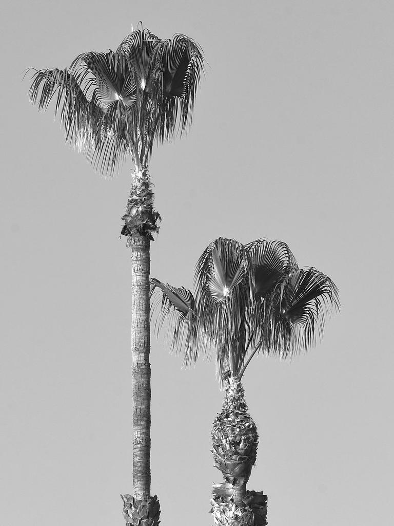 Post Your Black and Whites Photos!!-palms.jpg