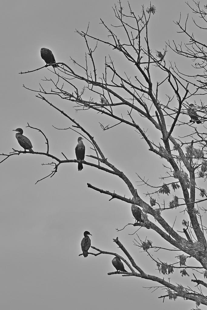 Post Your Black and Whites Photos!!-75f_0201_cr_sm.jpg