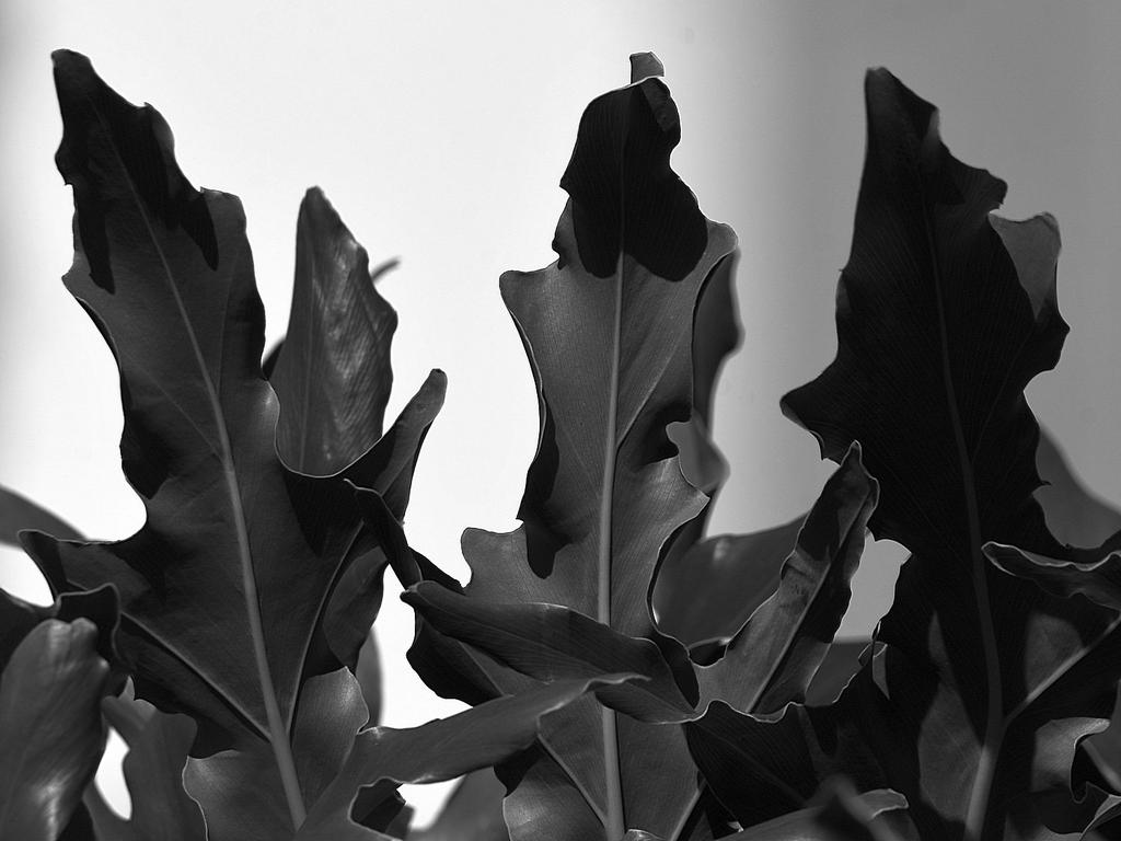 Post Your Black and Whites Photos!!-leaves.jpg