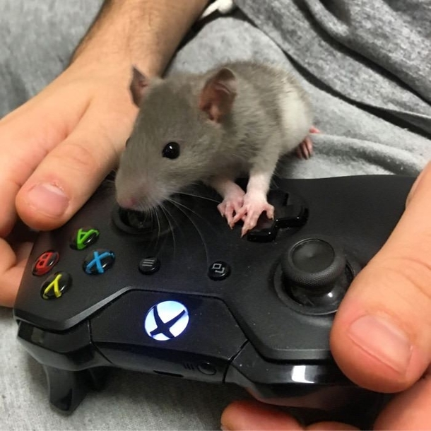 gaming mouse?-my-gaming-mouse-244325.jpg