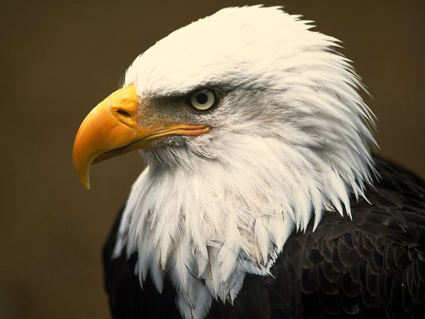 main function of a tripod stand-bald-eagle_1_600x450.jpg