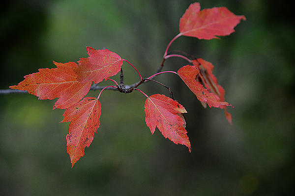 Uploading pictures from D5000-fall-leafs-0078.jpg