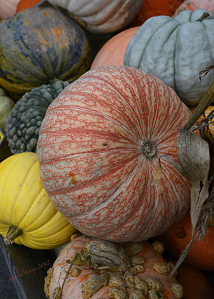 Price difference between D3000 and D5000?-harvest.jpg