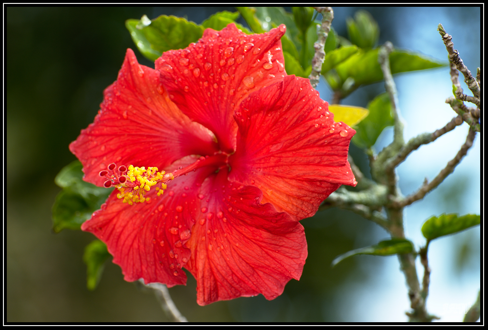 D50 memory card problems-305574d1549730379-february-2019-theme-flower-s-_71d8201.jpg