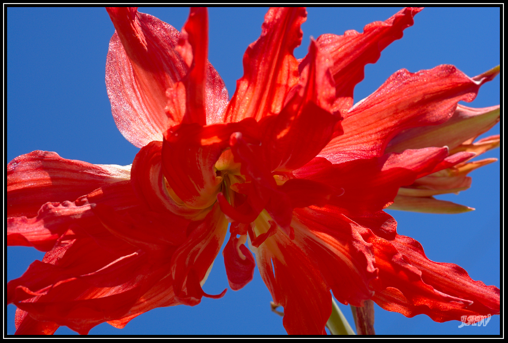 D50 memory card problems-305171d1549214048-february-2019-theme-flower-s-_71d8139.jpg