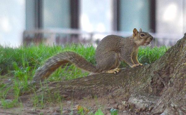 -squirrel_20130909_171924.jpg