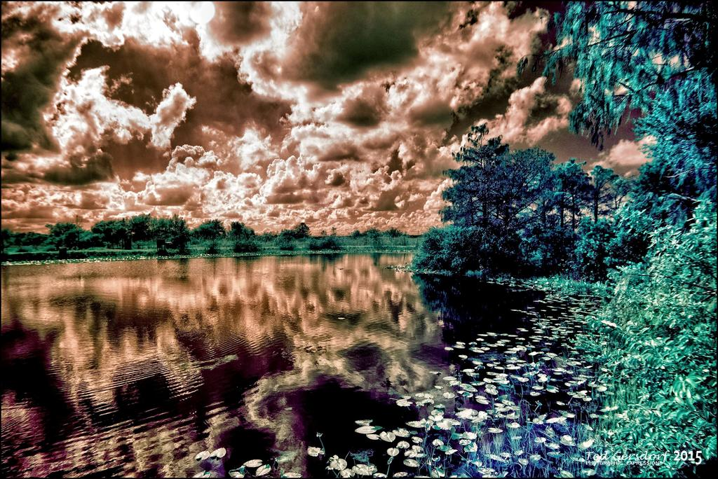 D3300 Infrared Conversion Photos-12-11-15-loxahatchee-ir-8.jpg