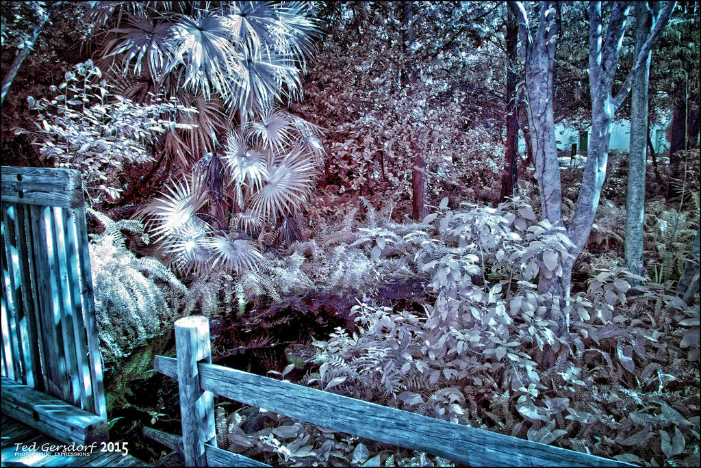D3300 Infrared Conversion Photos-12-12-15-18-55-test-6.jpg