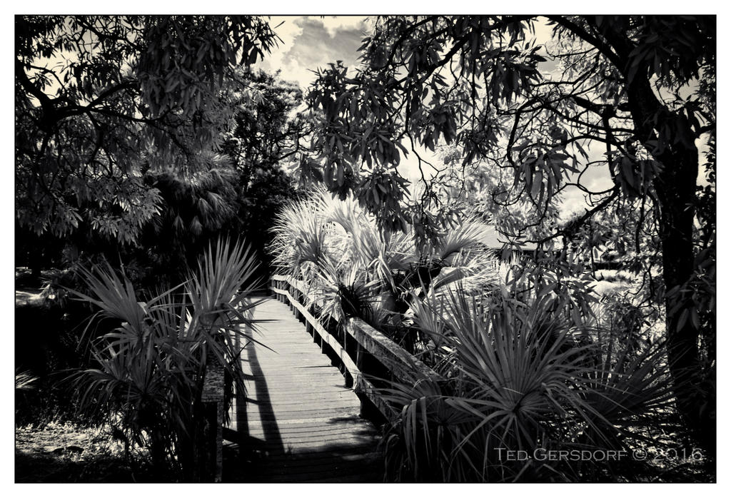 D3300 Infrared Conversion Photos-10-25-16-tradewinds-ir-6.1sm.jpg