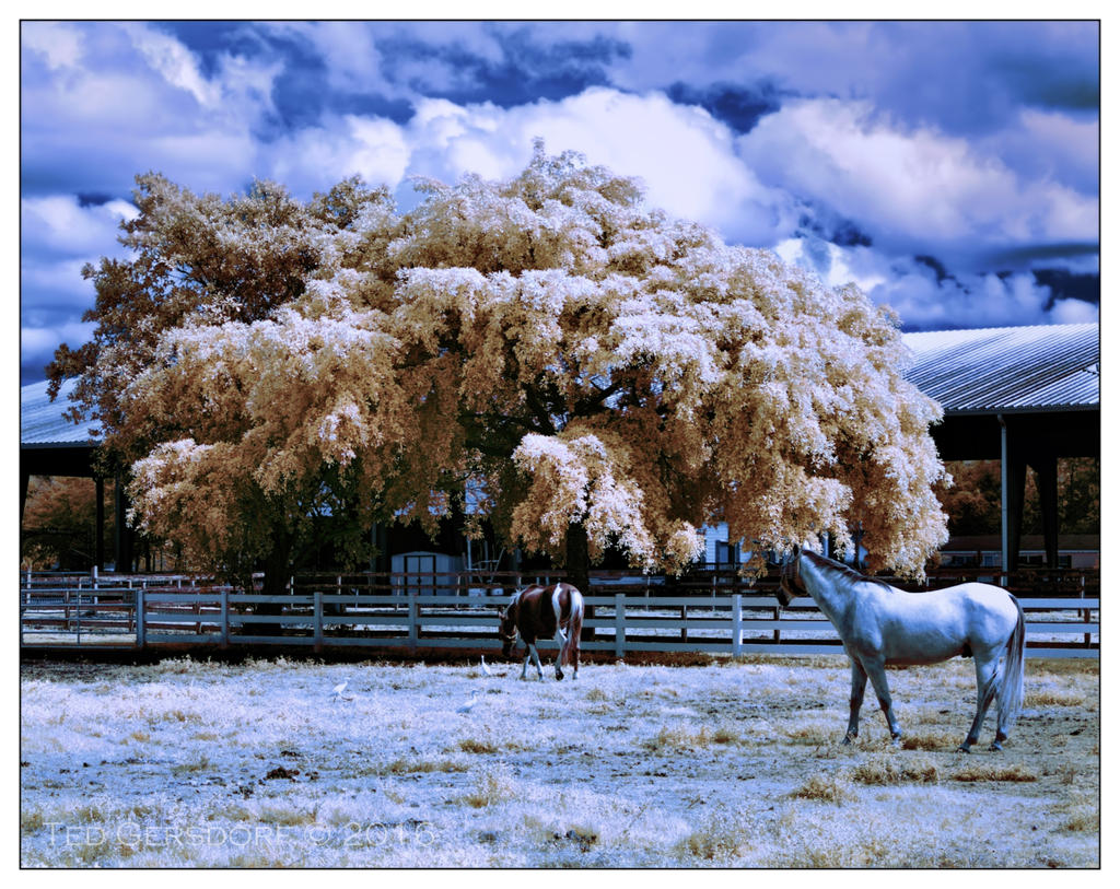 D3300 Infrared Conversion Photos-10-25-16-tradewinds-ir-8.1sm.jpg