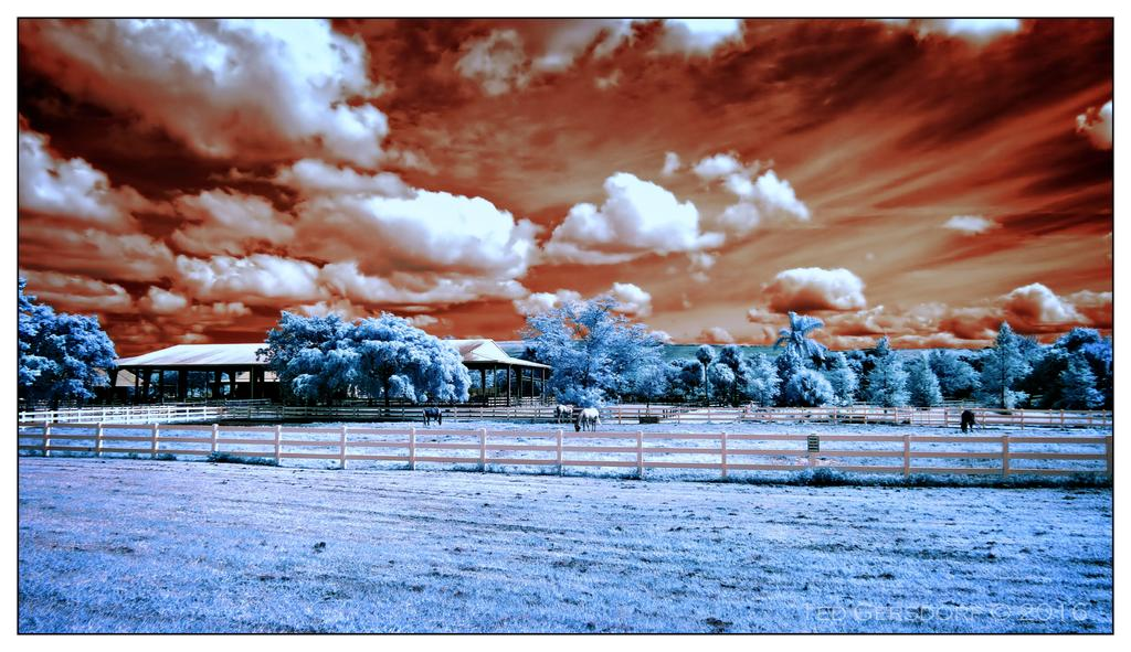 D3300 Infrared Conversion Photos-10-25-16-tradewinds-ir-7.1.jpg