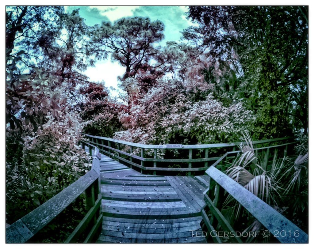 D3300 Infrared Conversion Photos-10-25-16-tradewinds-ir-11.1sm.jpg