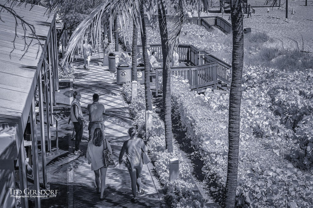 D3300 Infrared Conversion Photos-3-16-17-dfb-ir-1-7.jpg