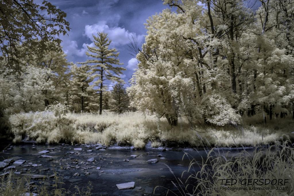 D3300 Infrared Conversion Photos-8-9-17-whitney-briggs-ir-1-1-_01.jpg