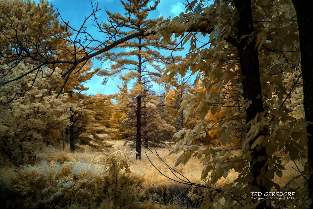 D3300 Infrared Conversion Photos-8-9-17-whitney-briggs-ir-1-1-2_01.jpg