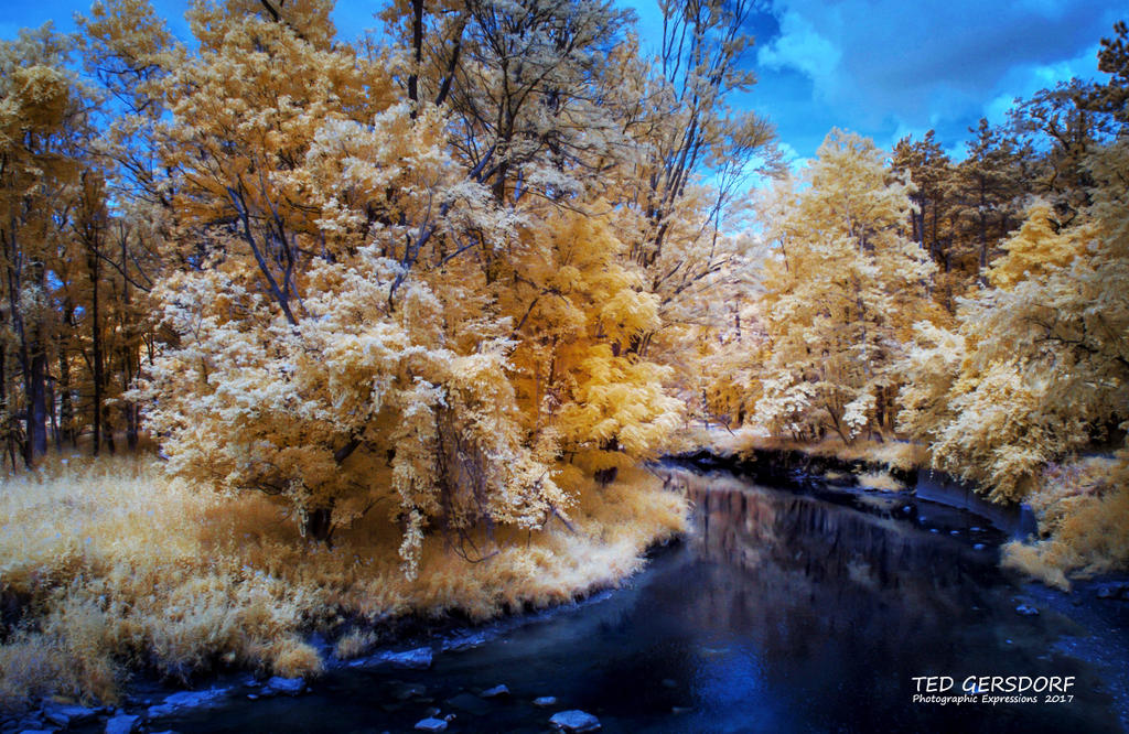 D3300 Infrared Conversion Photos-8-9-17-whitney-briggs-ir-1-1-3_01.jpg