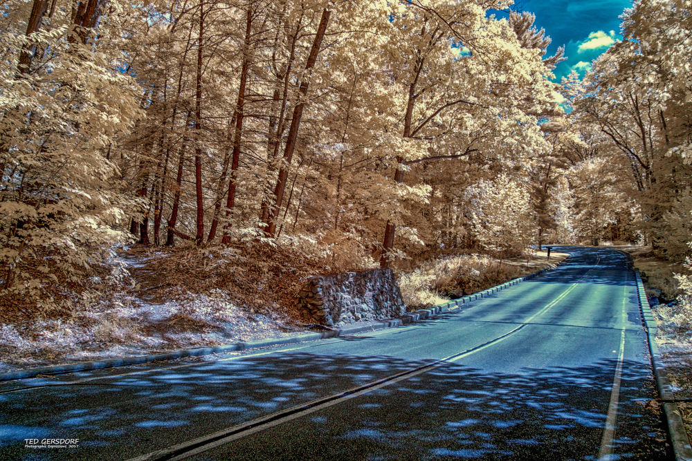 D3300 Infrared Conversion Photos-9-20-17-ir-lr-1-1-10_01.jpg